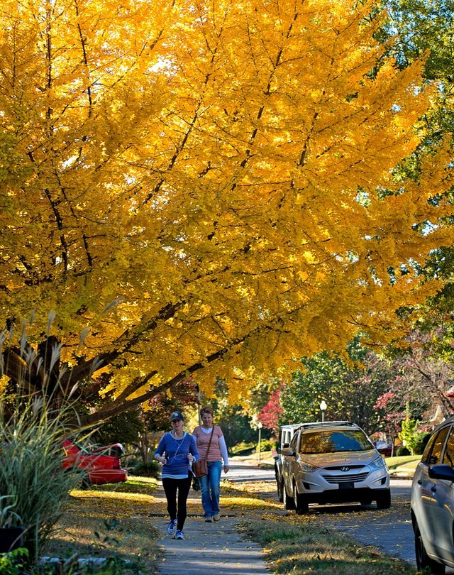 leaves06.jpg