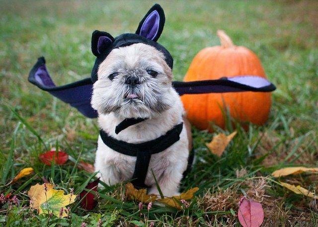 Cooper-Young presents DoggieBOOlooza
