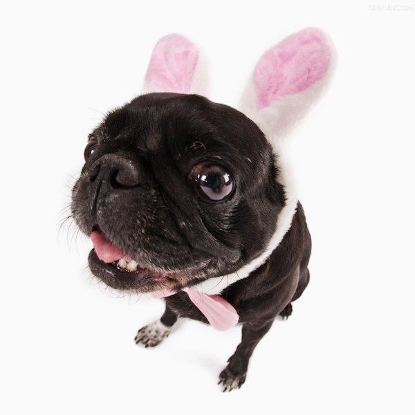 bunnydogzhouxuan12345678.jpg
