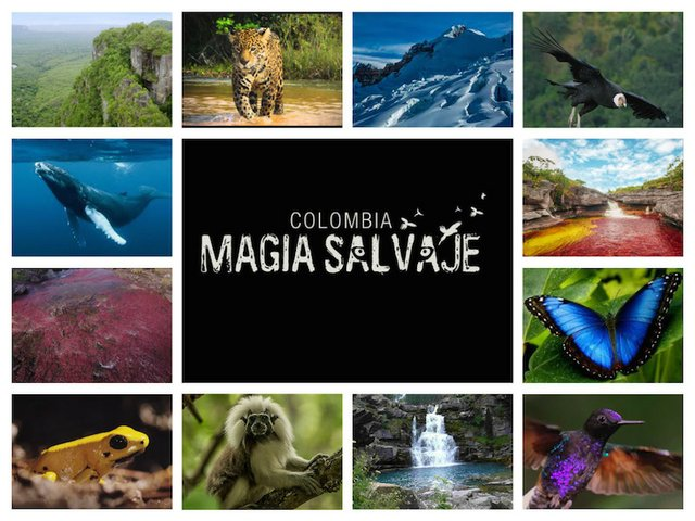 Wild Magic in Colombia