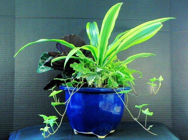 mixed houseplants.jpg