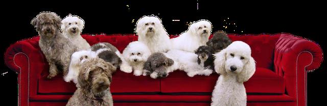 Olate Dogs, Buckman Arts Center