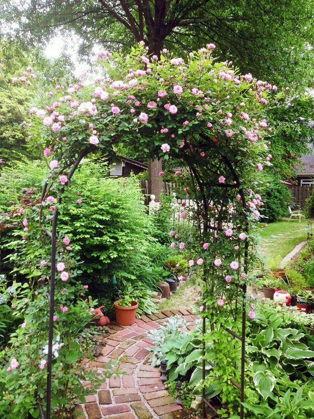 rose covered trellis barbara rea.jpg