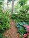path in Rea's woodland garden.jpg