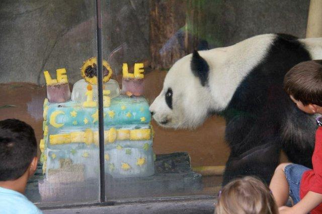 Le Le 's 20th Birthday Celebration, Memphis Zoo