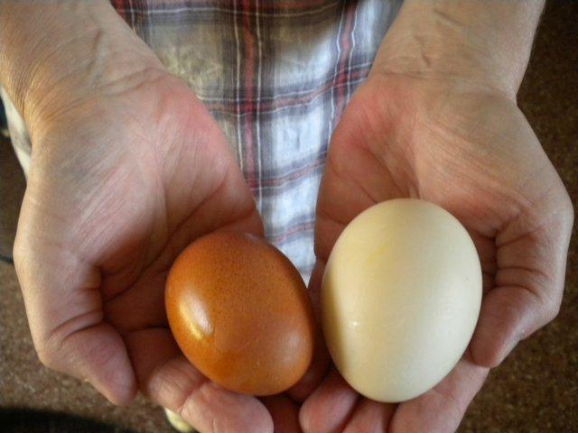 eggsinhand.JPG