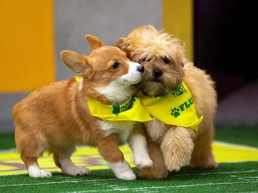 Animal Planet Puppy Bowl puppy play shot.jpg