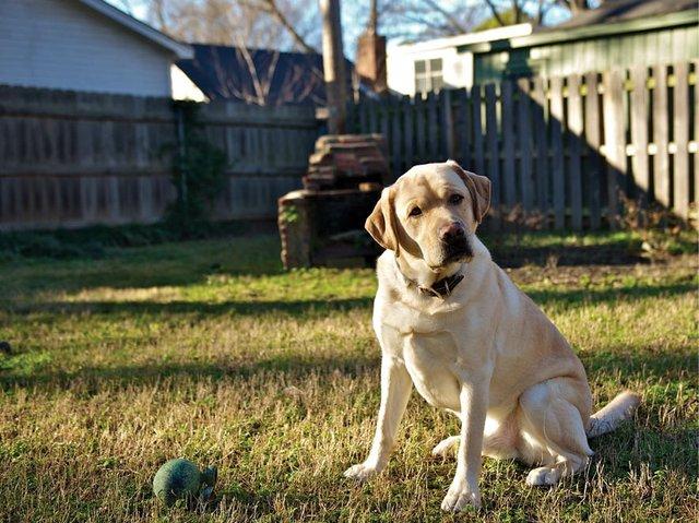 Hemp Helps: CBD for Pets - Memphis magazine