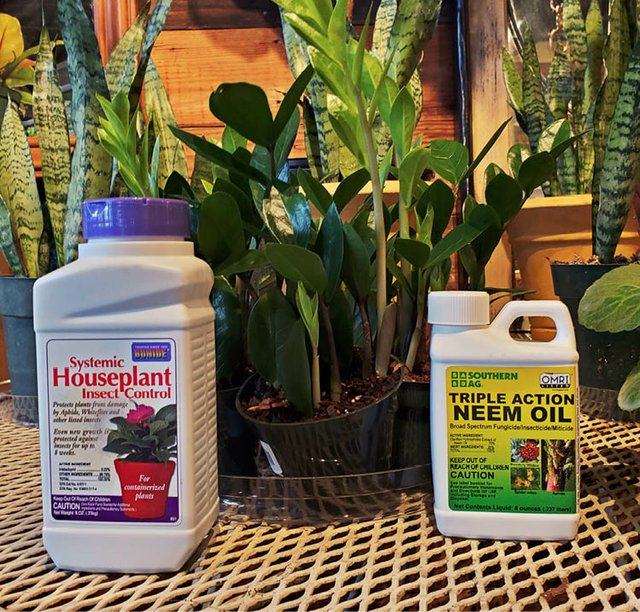 HOUSEPLANT_PRODUCTS.jpg
