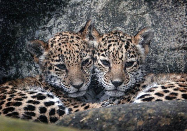 12052019_Baby_Jaguars___Focht_265SL.jpg