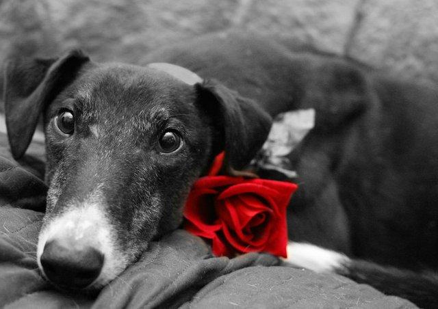 Paws & Kisses Valentine's Party, PetSuites