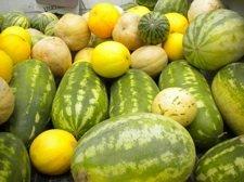 melonssm.jpg
