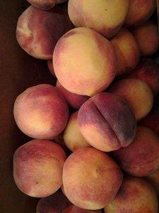 Peaches closeupsm.jpg