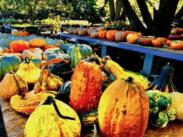 Fall Plant Sale, Memphis Botanic Garden