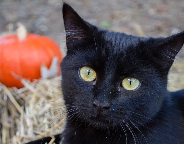 It's the Great Pumpkin, Charlie Brown (Box Lot) and Black Panther (Shelby Farms)