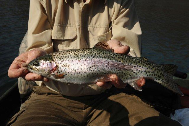 Little_Red_River_Fishing_Heber_Springs_2500-lowres.jpg