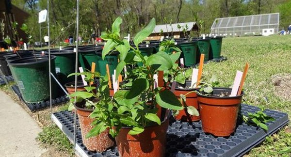 Volunteer Plant Sale, Lichterman Nature Center