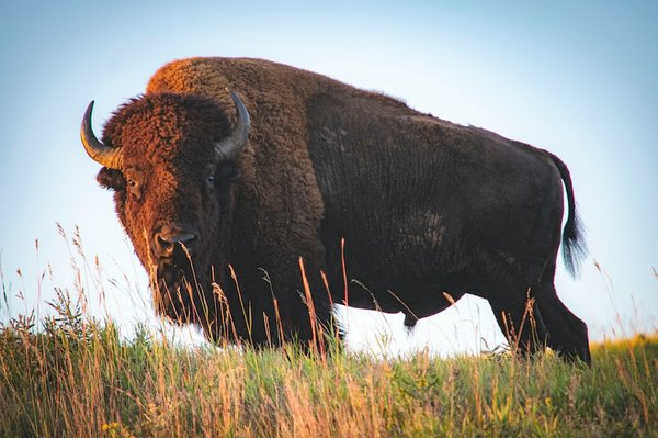 Annie Oakley Buffalo Bill Wild West Triathlon, Shelby Farms Park
