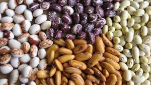 seedssm.jpg