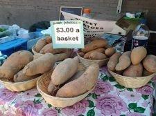 tommy potatoes.jpg