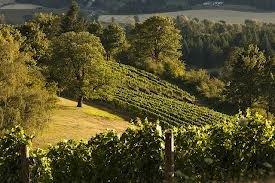 wine countrysm.jpg