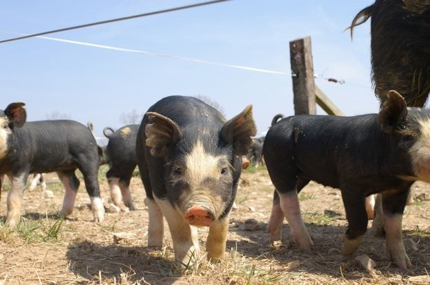 Farm tours, a pot-luck lunch, local wines, and Argentine-style barbecue highlight Newman Farm's annual Memorial Day celebration.