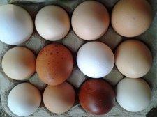 eggssm.jpg