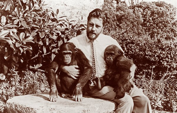 Gerald Durrell with chimp and gorilla at Jersey Zoo, 1959