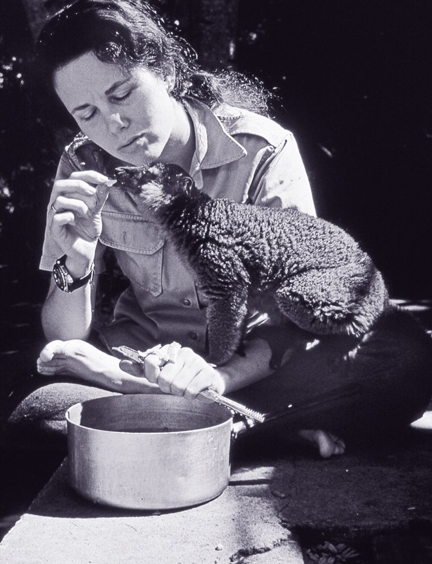 Lee Durrell feeding Chico, a red-collared lemur, Berenty, Madagascar, 1974