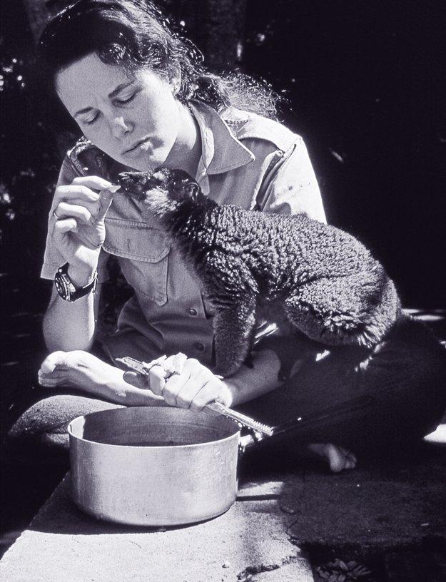 Lee Durrell feeding Chico, a red-collared lemur, Berenty, Madagascar, 1974