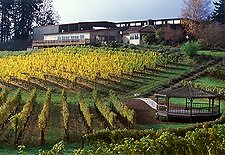 Elk cove vineyardsm.jpg