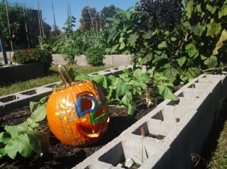 garden pumpkinsm.jpg