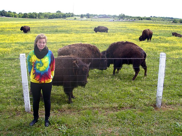 #32 - Stop and stare at the bison at Shelby Farms.