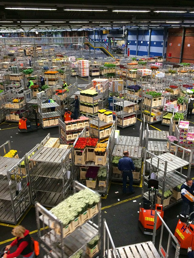 Colliding carts at Aalsmeer Flower Auction, the largest in the world