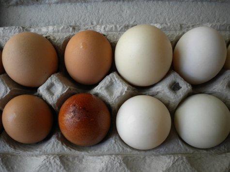 eggs carton sm.png