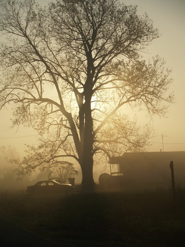 "Delta morning near Rolling Fork, Mississippi, 2008. ""The sun was just beginning to cut through the morning's fog."""