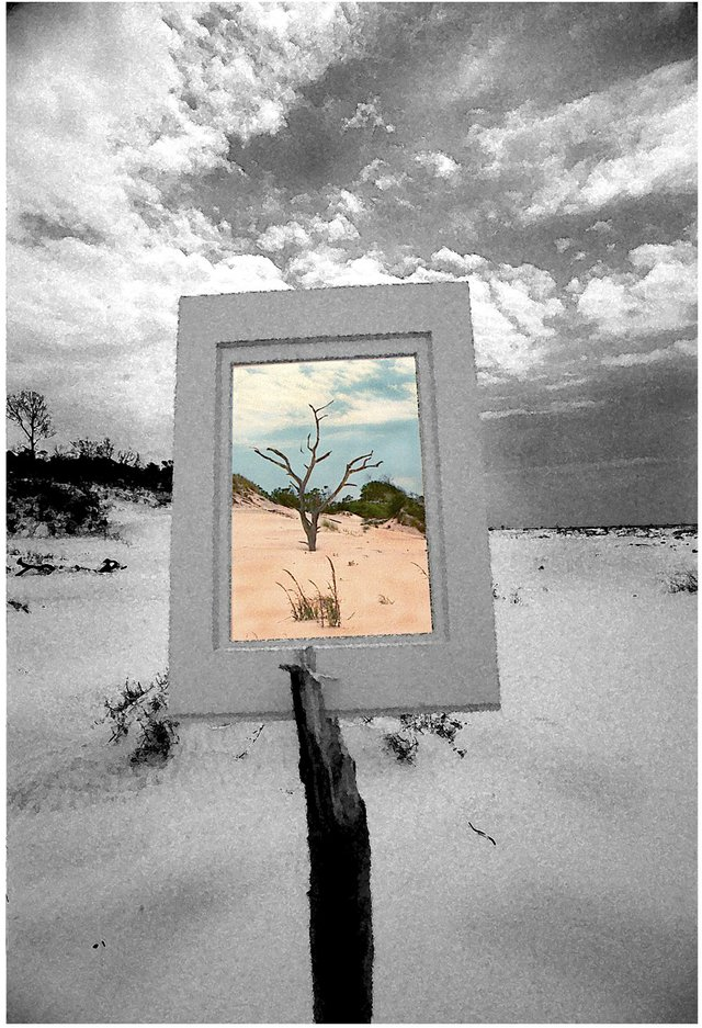 """Horn Island tree, 1999. Shooting through the mat, """"I wanted to make a statement about our need for control."""""""