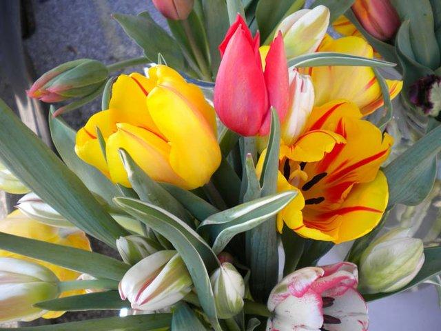 tulip-closeup.jpg