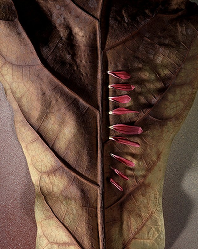From a series of photographs about leaves, 2004.
