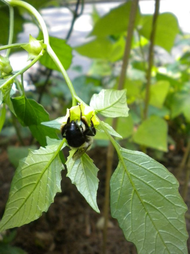 bee-in-gardensm.jpg