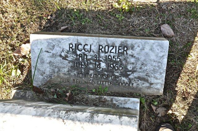 Rozier-ArcherPoodle.jpg