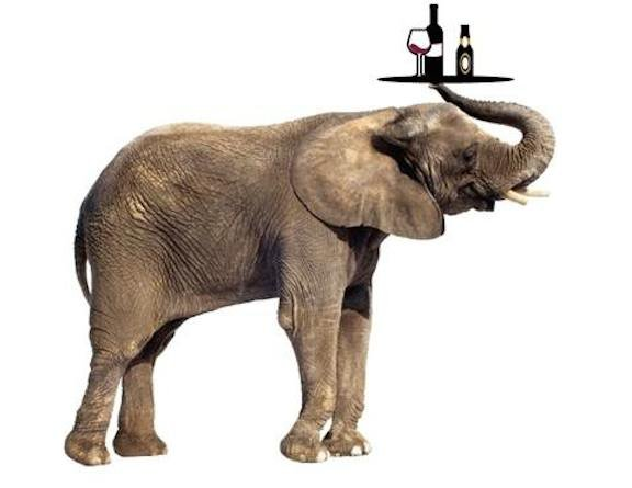 elephant-beer.jpg