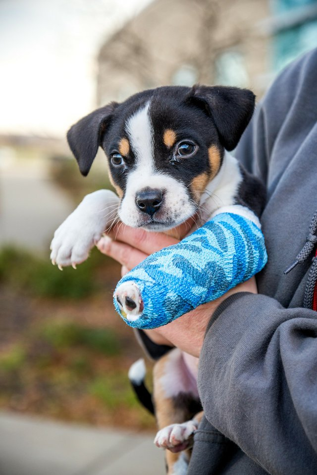 BeaglePuppyw-cast.jpg