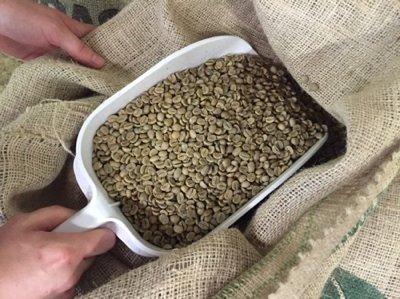 Coffee beans sm new (1).jpg