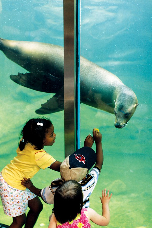 Zoo membership has its perks during members' night on Sunday. It's just plain seal-ly not to have a zoo membership.
