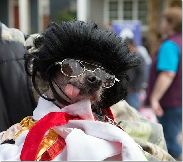 There might be an Elvis sighting or two at the Harbor Town Dog Show: Who Let the Dogs Out? this Sunday in Nursery Park.
